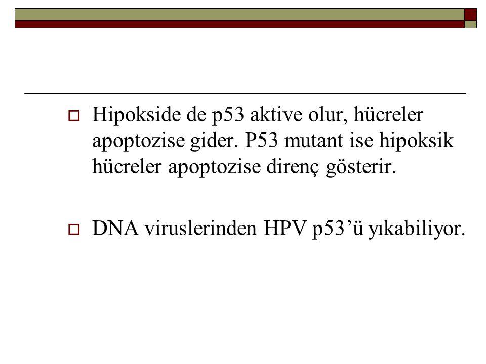  Hipokside de p53 aktive olur, hücreler apoptozise gider. P53 mutant ise hipoksik hücreler apoptozise direnç gösterir.  DNA viruslerinden HPV p53'ü