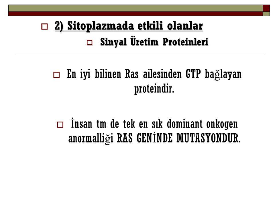  2) Sitoplazmada etkili olanlar  Sinyal Üretim Proteinleri  En iyi bilinen Ras ailesinden GTP ba ğ layan proteindir.  İ nsan tm de tek en sık domi