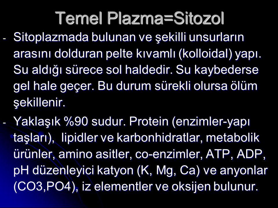 Temel Plazma=Sitozol - Sitoplazmada bulunan ve şekilli unsurların arasını dolduran pelte kıvamlı (kolloidal) yapı. Su aldığı sürece sol haldedir. Su k