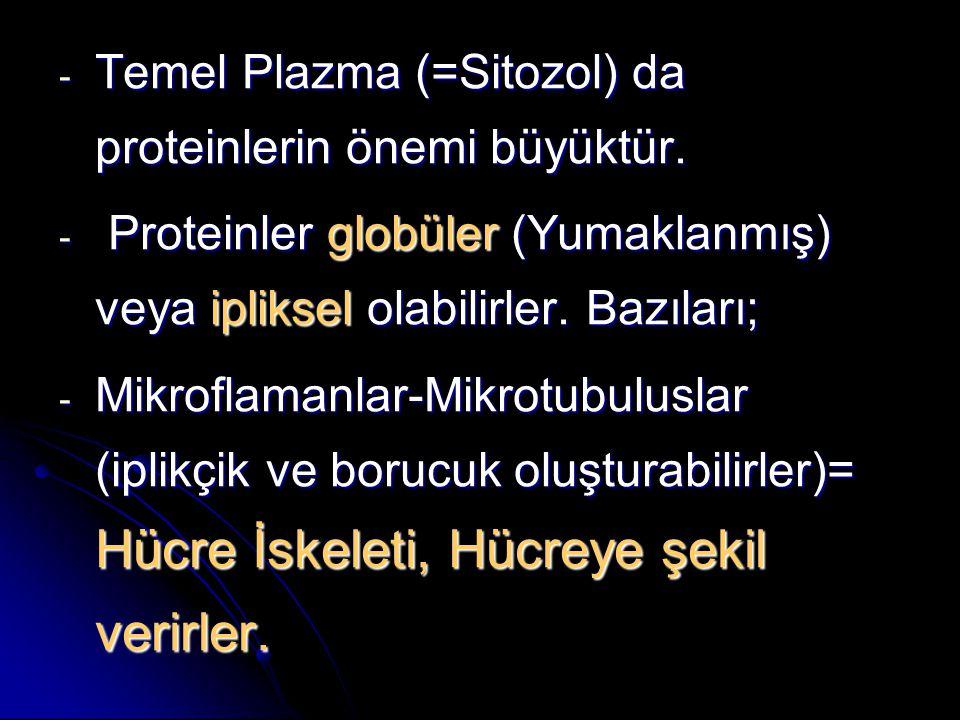 - Temel Plazma (=Sitozol) da proteinlerin önemi büyüktür. - Proteinler globüler (Yumaklanmış) veya ipliksel olabilirler. Bazıları; - Mikroflamanlar-Mi