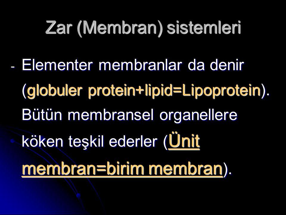 Zar (Membran) sistemleri - Elementer membranlar da denir (globuler protein+lipid=Lipoprotein). Bütün membransel organellere köken teşkil ederler ( Üni