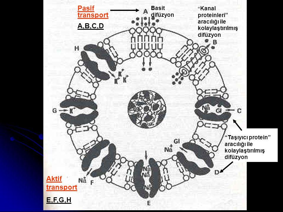 """Basit difüzyon """" Kanal proteinleri"""" aracılığı ile kolaylaştırılmış difüzyon """"Taşıyıcı protein"""" aracılığı ile kolaylaştırılmış difüzyon Aktif transport"""