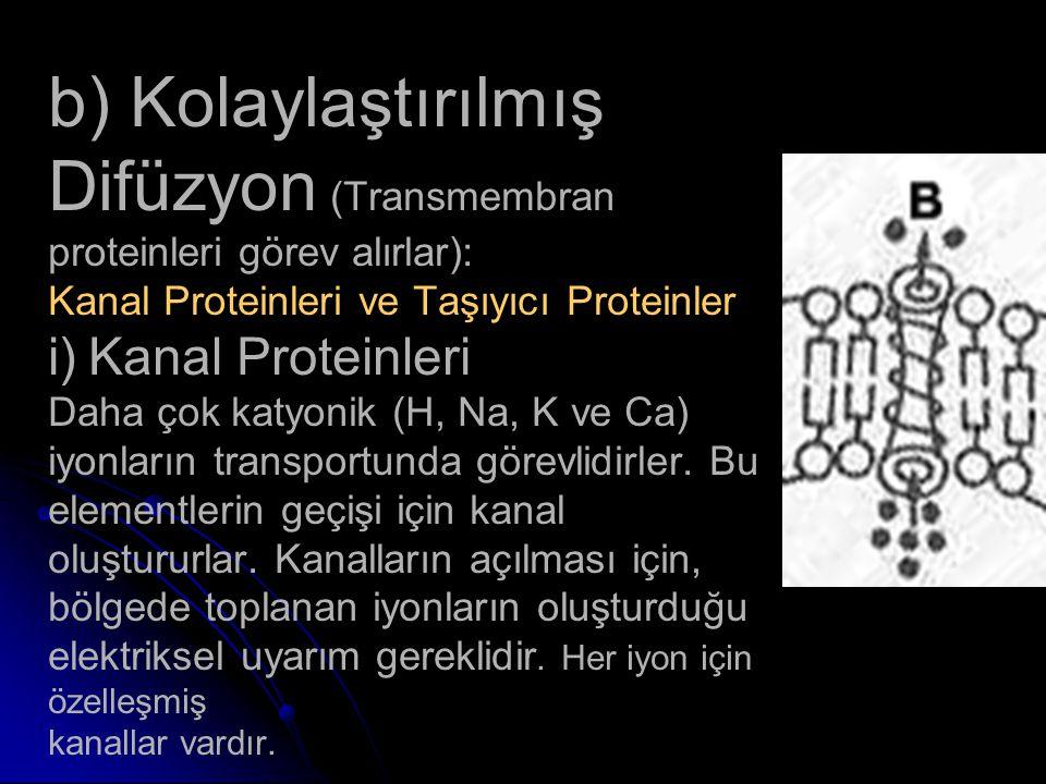 b) Kolaylaştırılmış Difüzyon (Transmembran proteinleri görev alırlar): Kanal Proteinleri ve Taşıyıcı Proteinler i) Kanal Proteinleri Daha çok katyonik
