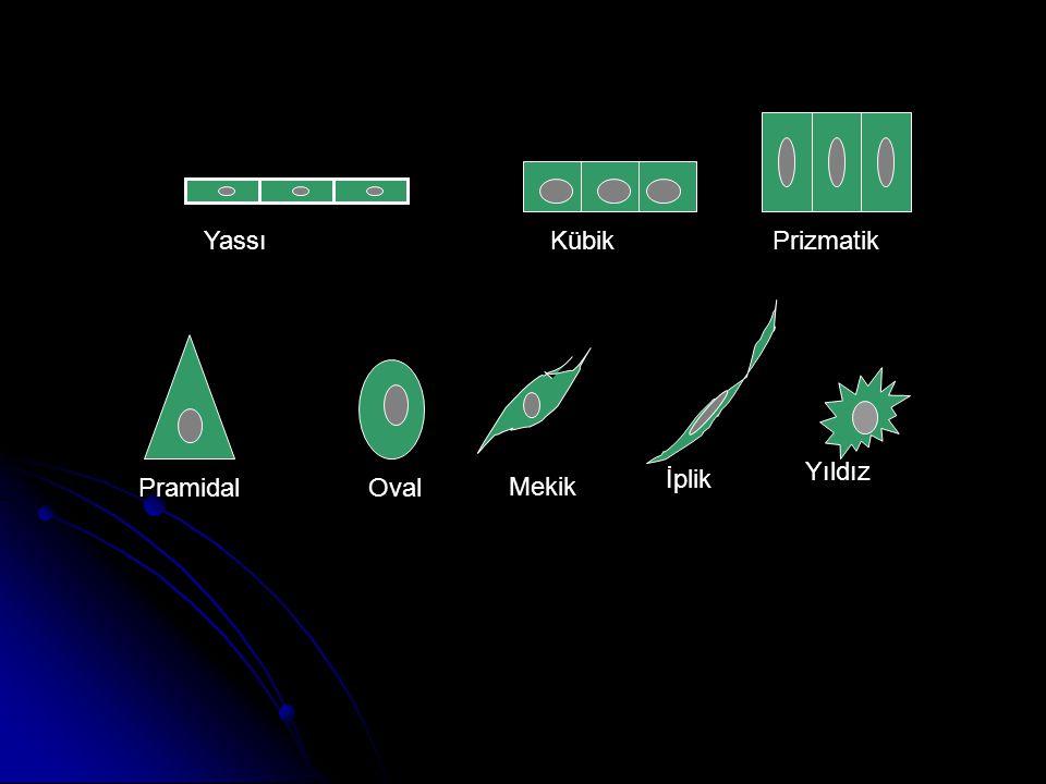 YassıKübikPrizmatik PramidalOval Mekik İplik Yıldız