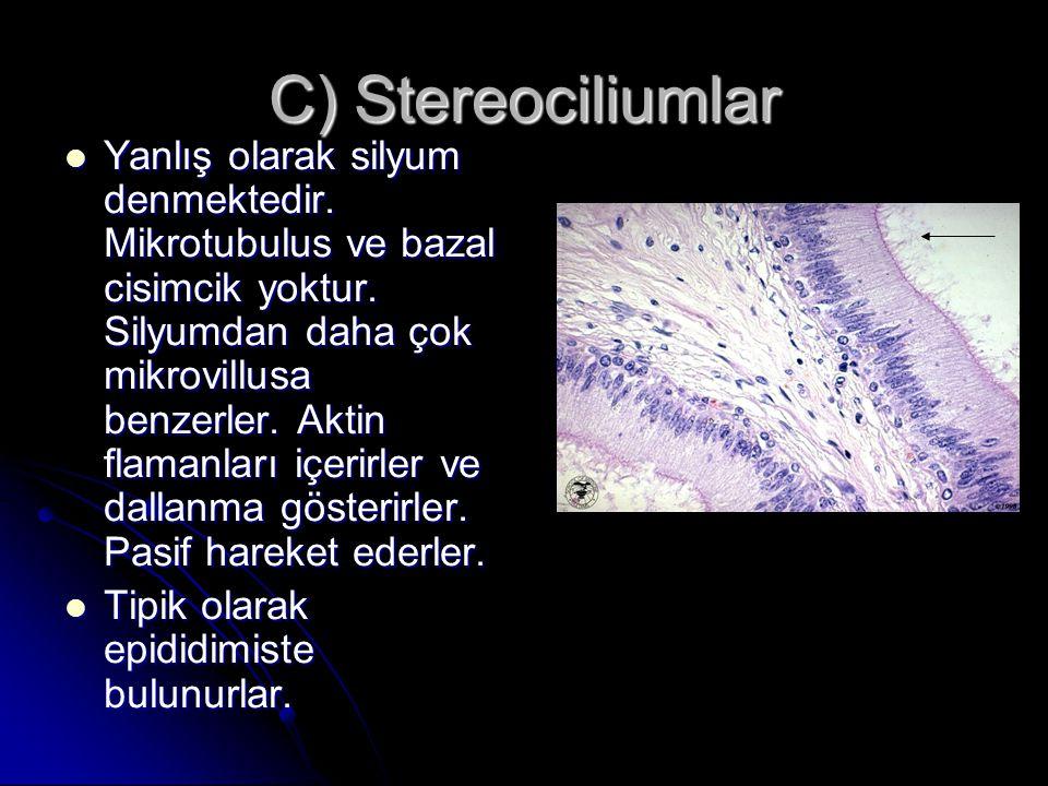 C) Stereociliumlar Yanlış olarak silyum denmektedir. Mikrotubulus ve bazal cisimcik yoktur. Silyumdan daha çok mikrovillusa benzerler. Aktin flamanlar