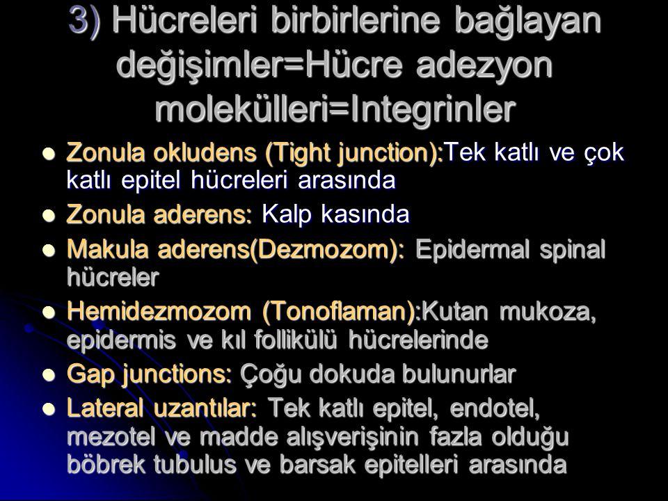 3) Hücreleri birbirlerine bağlayan değişimler=Hücre adezyon molekülleri=Integrinler Zonula okludens (Tight junction):Tek katlı ve çok katlı epitel hüc