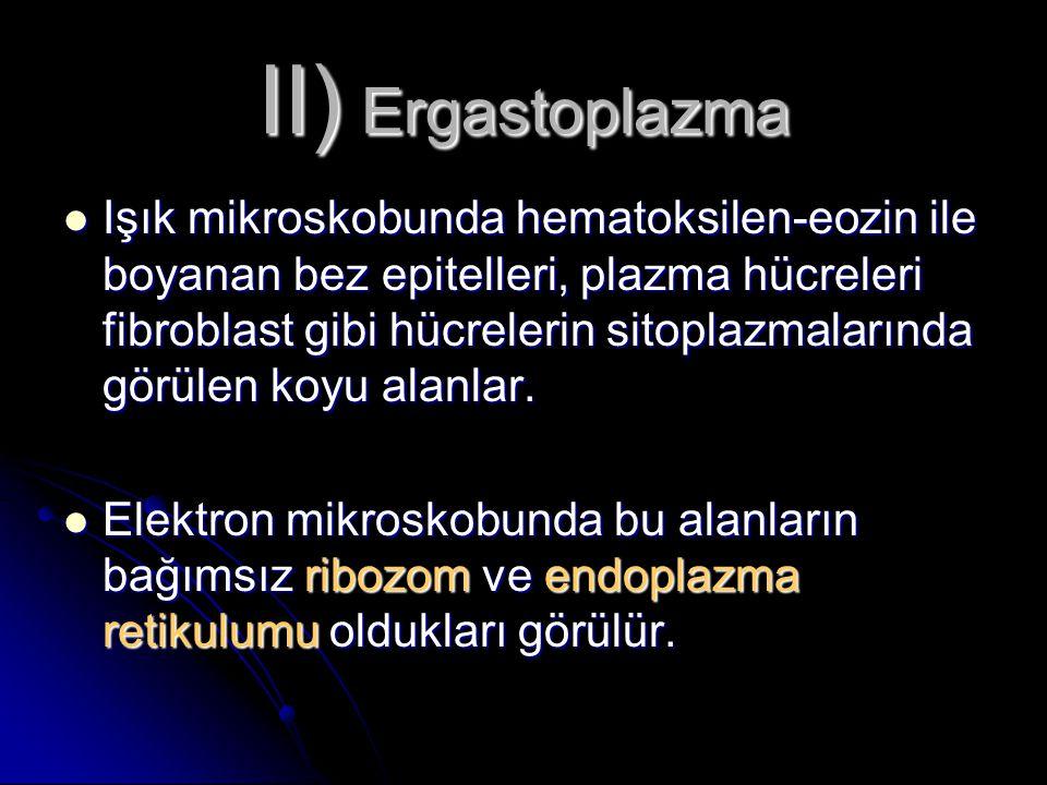 II) Ergastoplazma Işık mikroskobunda hematoksilen-eozin ile boyanan bez epitelleri, plazma hücreleri fibroblast gibi hücrelerin sitoplazmalarında görü