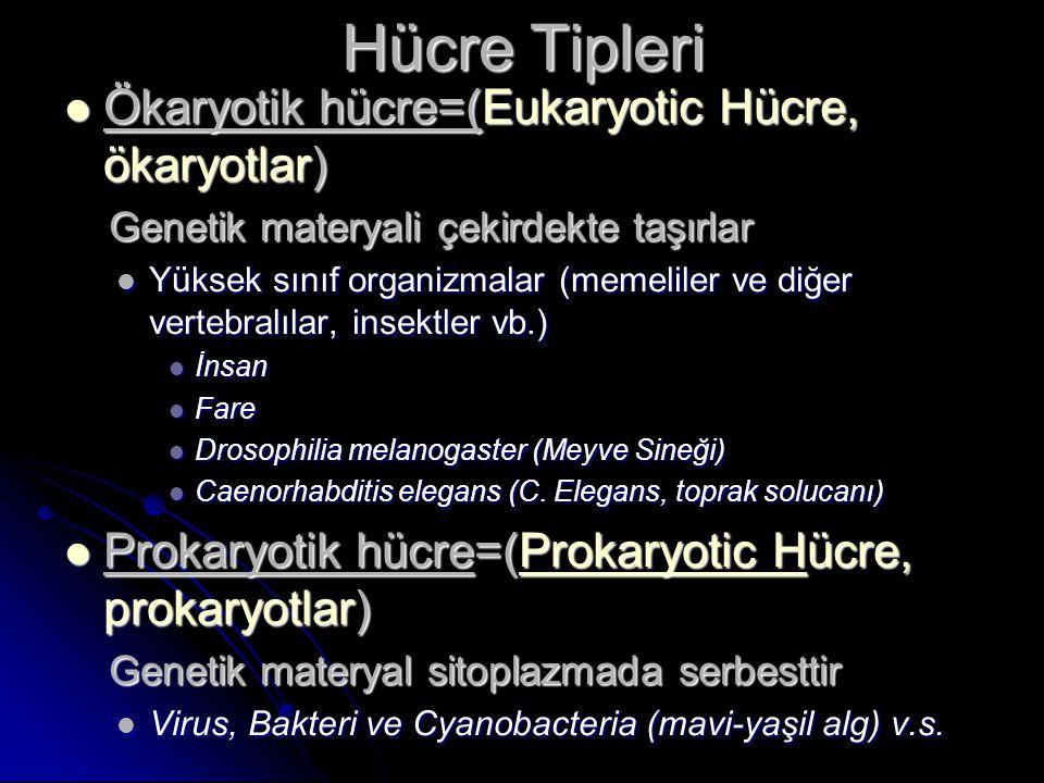 Hücre Tipleri Ökaryotik hücre=(Eukaryotic Hücre, ökaryotlar) Ökaryotik hücre=(Eukaryotic Hücre, ökaryotlar) Genetik materyali çekirdekte taşırlar Gene