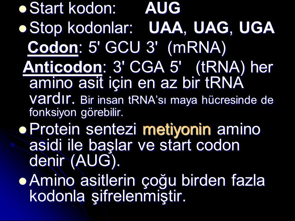 Start kodon: AUG Start kodon: AUG Stop kodonlar: UAA, UAG, UGA Stop kodonlar: UAA, UAG, UGA Codon: 5' GCU 3' (mRNA) Codon: 5' GCU 3' (mRNA) Anticodon: