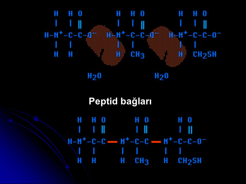 Peptid bağları