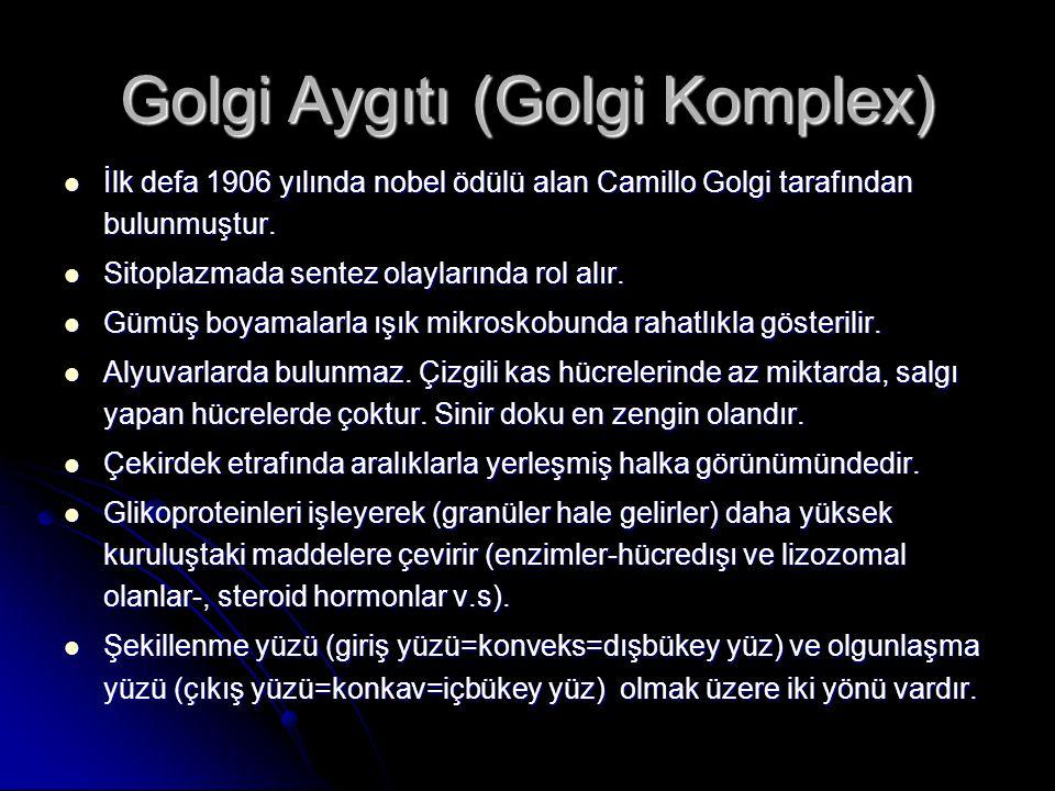 Golgi Aygıtı (Golgi Komplex) İlk defa 1906 yılında nobel ödülü alan Camillo Golgi tarafından bulunmuştur. İlk defa 1906 yılında nobel ödülü alan Camil
