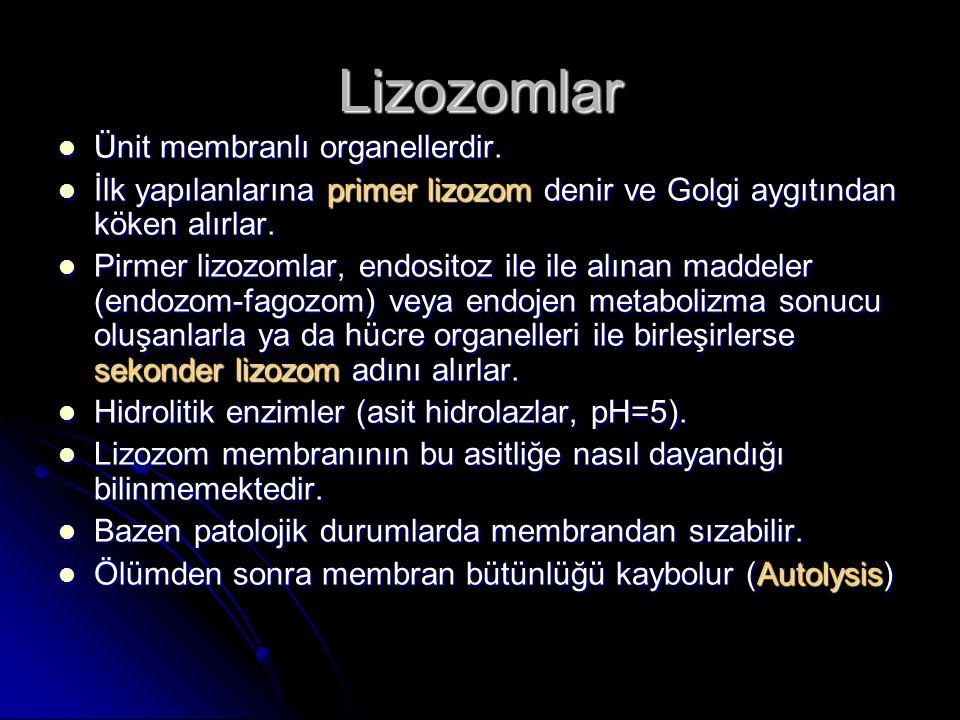 Lizozomlar Ünit membranlı organellerdir. Ünit membranlı organellerdir. İlk yapılanlarına primer lizozom denir ve Golgi aygıtından köken alırlar. İlk y