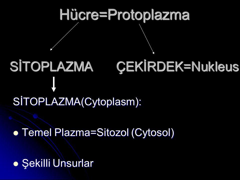Hücre=Protoplazma SİTOPLAZMA ÇEKİRDEK=Nukleus SİTOPLAZMA(Cytoplasm): Temel Plazma=Sitozol (Cytosol) Temel Plazma=Sitozol (Cytosol) Şekilli Unsurlar Şe