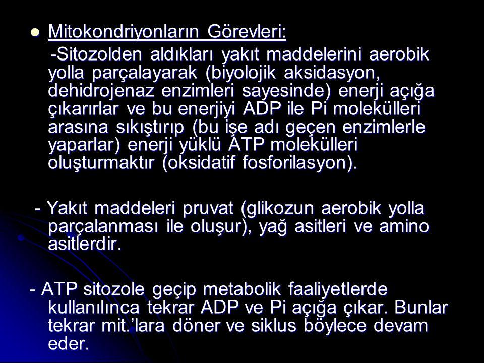 Mitokondriyonların Görevleri: Mitokondriyonların Görevleri: -Sitozolden aldıkları yakıt maddelerini aerobik yolla parçalayarak (biyolojik aksidasyon,