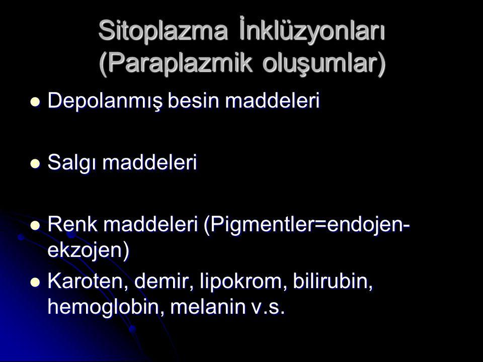 Sitoplazma İnklüzyonları (Paraplazmik oluşumlar) Depolanmış besin maddeleri Depolanmış besin maddeleri Salgı maddeleri Salgı maddeleri Renk maddeleri