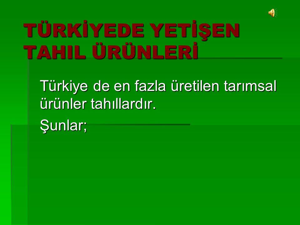 TÜRKİYEDE YETİŞEN TAHIL ÜRÜNLERİ Türkiye de en fazla üretilen tarımsal ürünler tahıllardır. Şunlar;