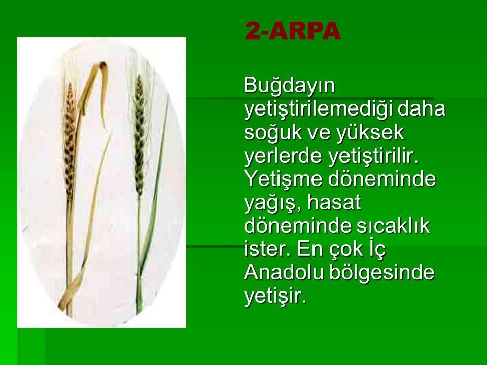 ARPA Buğdayın yetiştirilemediği daha soğuk ve yüksek yerlerde yetiştirilir. Yetişme döneminde yağış, hasat döneminde sıcaklık ister. En çok İç Anadolu