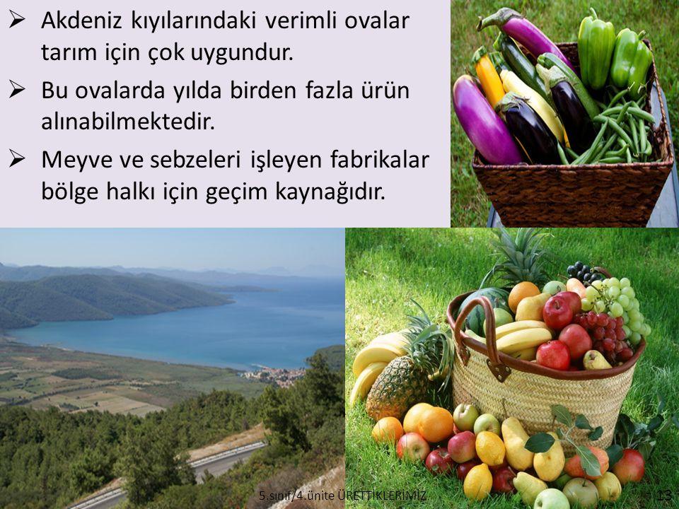  Akdeniz kıyılarındaki verimli ovalar tarım için çok uygundur.  Bu ovalarda yılda birden fazla ürün alınabilmektedir.  Meyve ve sebzeleri işleyen f