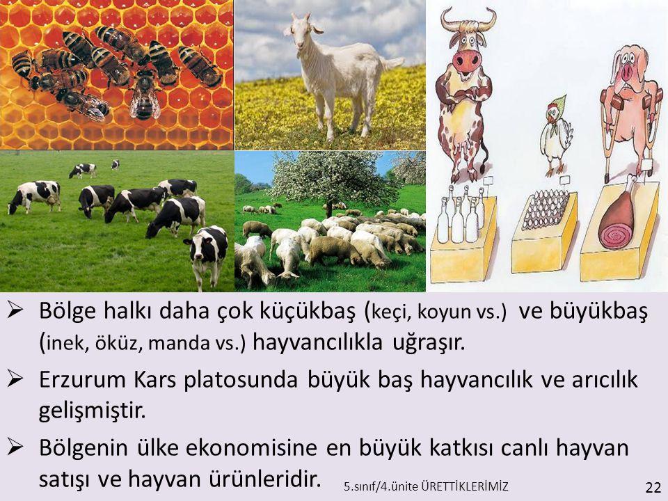  Bölge halkı daha çok küçükbaş ( keçi, koyun vs.) ve büyükbaş ( inek, öküz, manda vs.) hayvancılıkla uğraşır.  Erzurum Kars platosunda büyük baş hay
