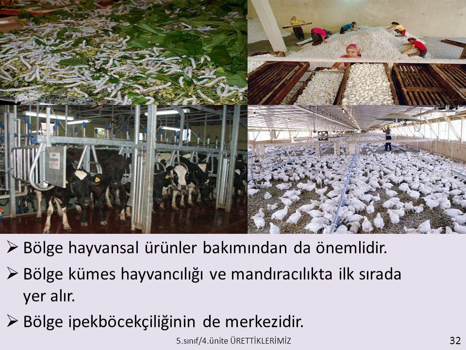  Bölge hayvansal ürünler bakımından da önemlidir.  Bölge kümes hayvancılığı ve mandıracılıkta ilk sırada yer alır.  Bölge ipekböcekçiliğinin de mer