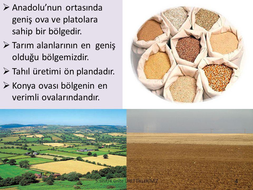  Anadolu'nun ortasında geniş ova ve platolara sahip bir bölgedir.  Tarım alanlarının en geniş olduğu bölgemizdir.  Tahıl üretimi ön plandadır.  Ko