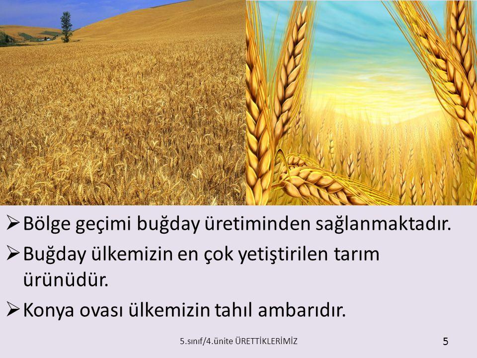  Bölge geçimi buğday üretiminden sağlanmaktadır.  Buğday ülkemizin en çok yetiştirilen tarım ürünüdür.  Konya ovası ülkemizin tahıl ambarıdır. 5.sı