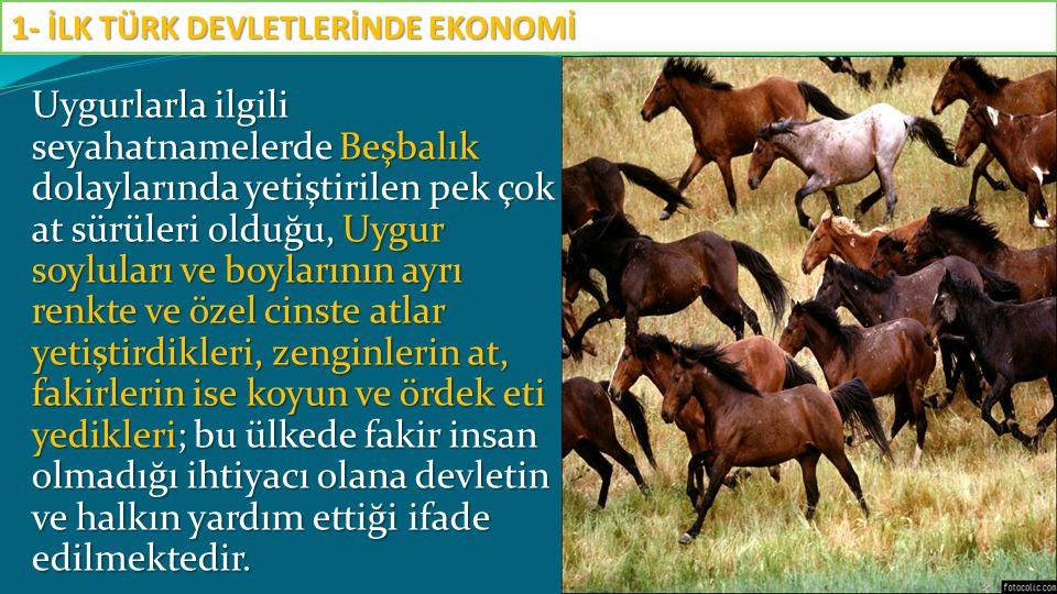 Uygurlarla ilgili seyahatnamelerde Beşbalık dolaylarında yetiştirilen pek çok at sürüleri olduğu, Uygur soyluları ve boylarının ayrı renkte ve özel ci