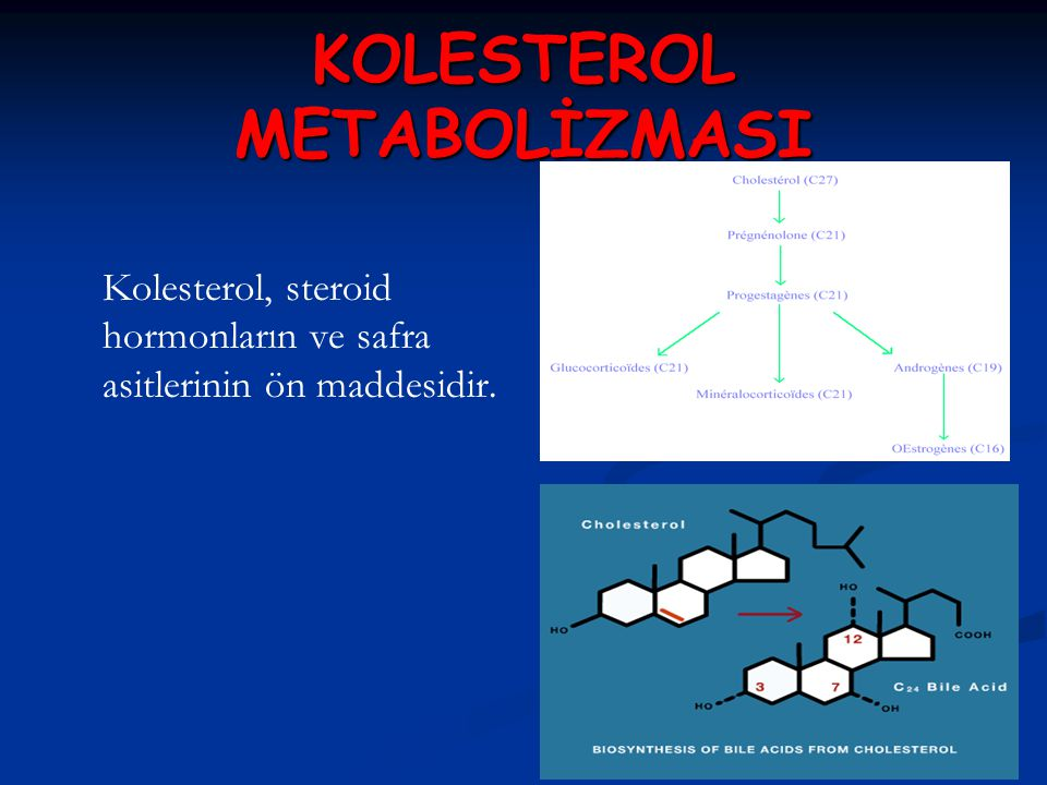 KOLESTEROL METABOLİZMASI Kolesterol, steroid hormonların ve safra asitlerinin ön maddesidir.
