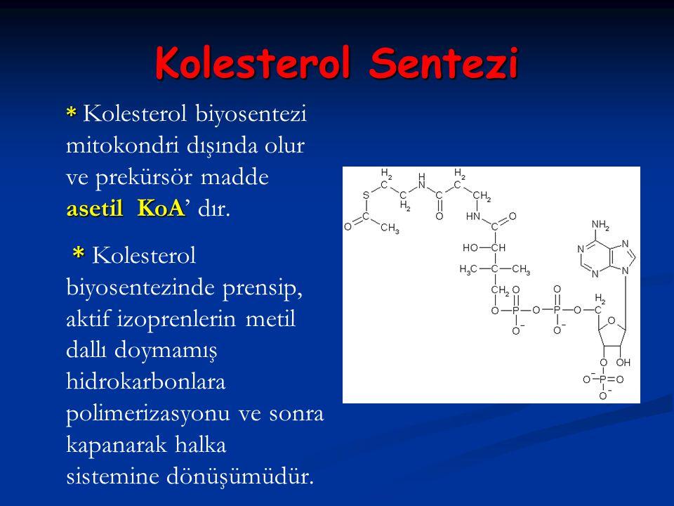 Kolesterol Sentezi * asetil KoA * Kolesterol biyosentezi mitokondri dışında olur ve prekürsör madde asetil KoA' dır. * * Kolesterol biyosentezinde pre