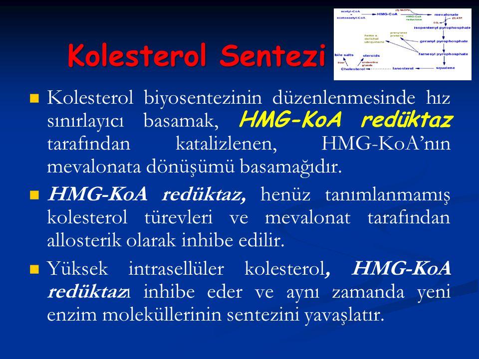 Kolesterol biyosentezinin düzenlenmesinde hız sınırlayıcı basamak, HMG-KoA redüktaz tarafından katalizlenen, HMG-KoA'nın mevalonata dönüşümü basamağıd