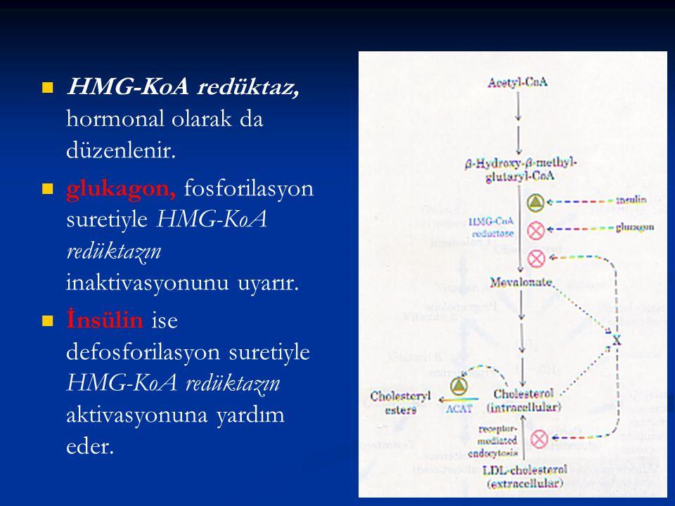 HMG-KoA redüktaz, hormonal olarak da düzenlenir. glukagon, fosforilasyon suretiyle HMG-KoA redüktazın inaktivasyonunu uyarır. İnsülin ise defosforilas