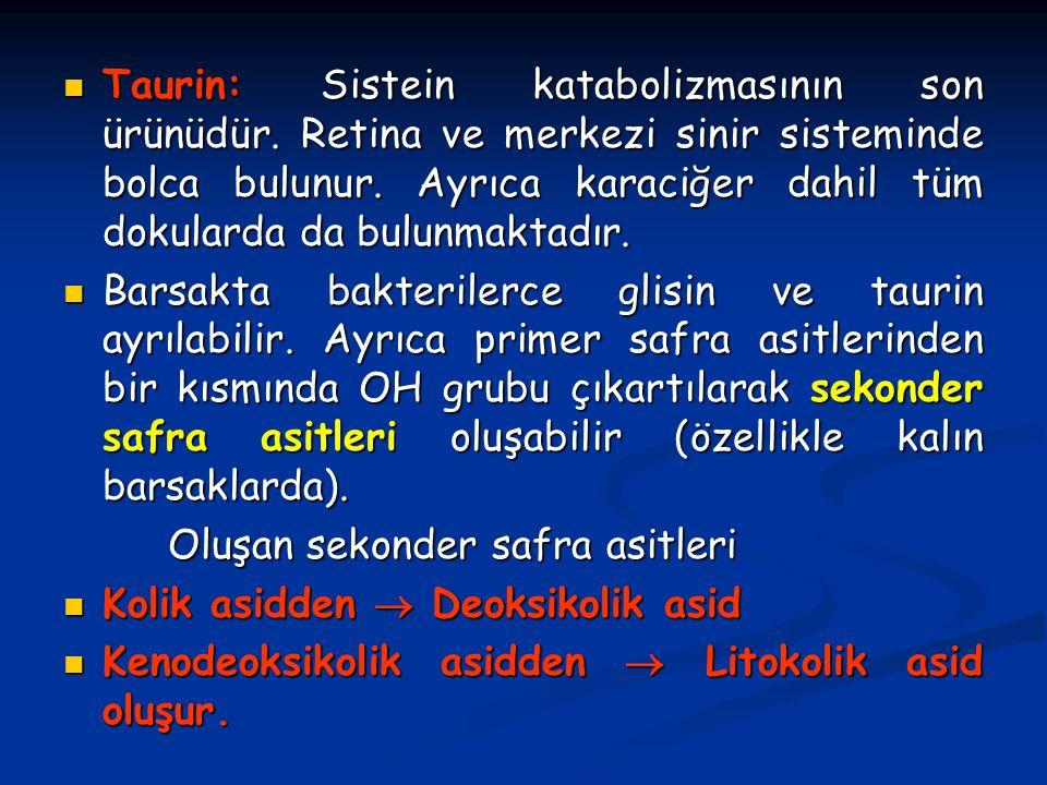 Taurin: Sistein katabolizmasının son ürünüdür. Retina ve merkezi sinir sisteminde bolca bulunur. Ayrıca karaciğer dahil tüm dokularda da bulunmaktadır