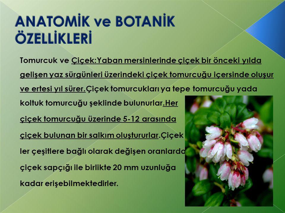 Tomurcuk ve Çiçek:Yaban mersinlerinde çiçek bir önceki yılda gelişen yaz sürgünleri üzerindeki çiçek tomurcuğu içersinde oluşur ve ertesi yıl sürer.Çi
