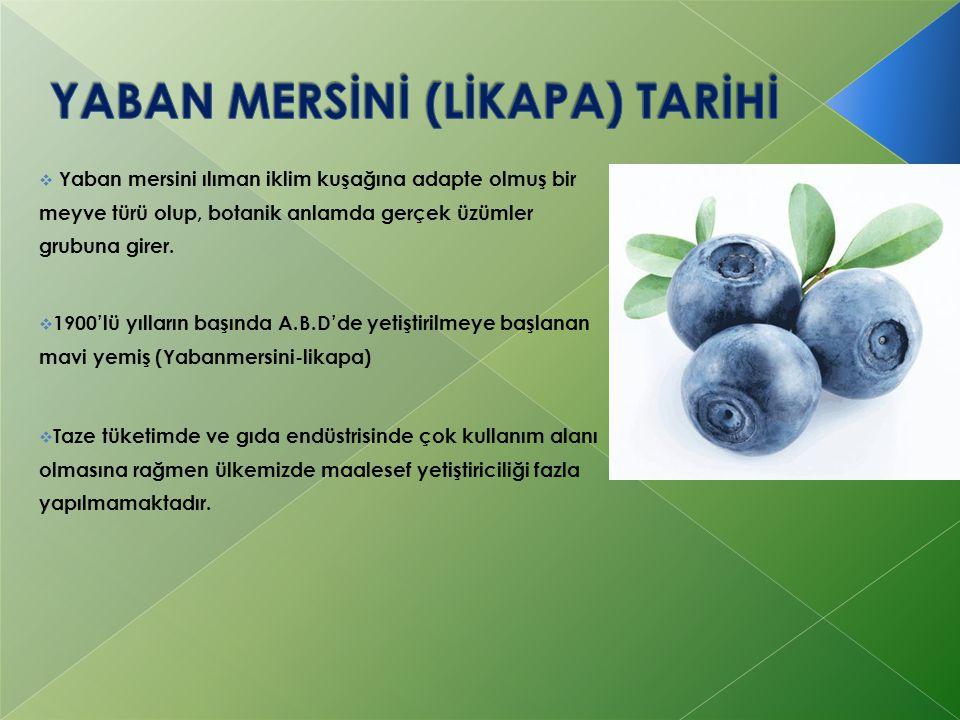  Tohumla çoğaltma: Islah çalışmalarına yönelik çalışmalarda kullanılmaktadır.Diğer üzümsü meyvelerdeki yöntemle yapılmaktadır.Tam olgunlaşmış meyveden alınan tohumların üzeri 3 mm kalınlığında ince bir kum tabakası ile örtülür.Tohumlar serada 15-25˚С'de 5-8 hafta içerisinde çimlendirilmektedir.