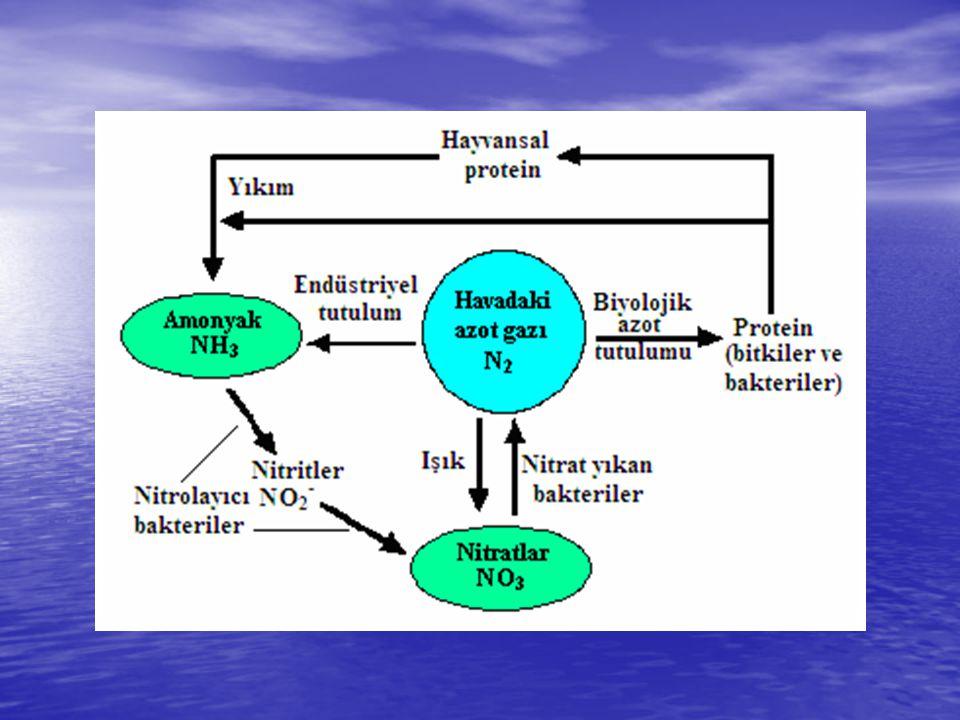 Yapısında azot bulunduran başlıca organik bileşikler: Aminler Aminler Amitler (Primer amitler, Sekonder amitler) Amitler (Primer amitler, Sekonder amitler) İmitler ve nitriller İmitler ve nitriller Proteinler Proteinler İzosiyanit ve türevleri İzosiyanit ve türevleri Nitrozo ve nitro bileşikleri.