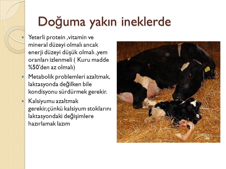 Do ğ uma yakın ineklerde Yeterli protein,vitamin ve mineral düzeyi olmalı ancak enerji düzeyi düşük olmalı,yem oranları izlenmeli ( Kuru madde %50'den