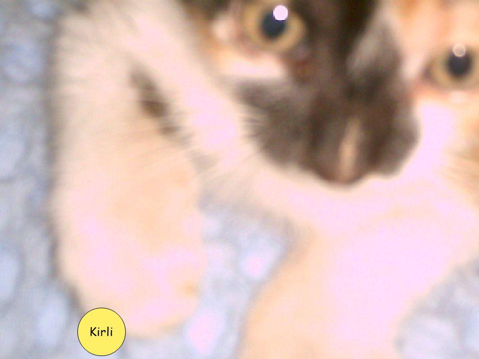 Kirli