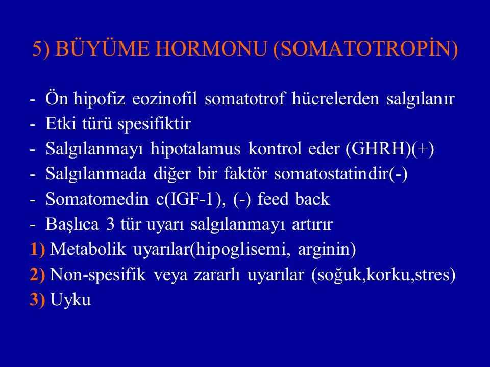 5) BÜYÜME HORMONU (SOMATOTROPİN) - Ön hipofiz eozinofil somatotrof hücrelerden salgılanır - Etki türü spesifiktir - Salgılanmayı hipotalamus kontrol e
