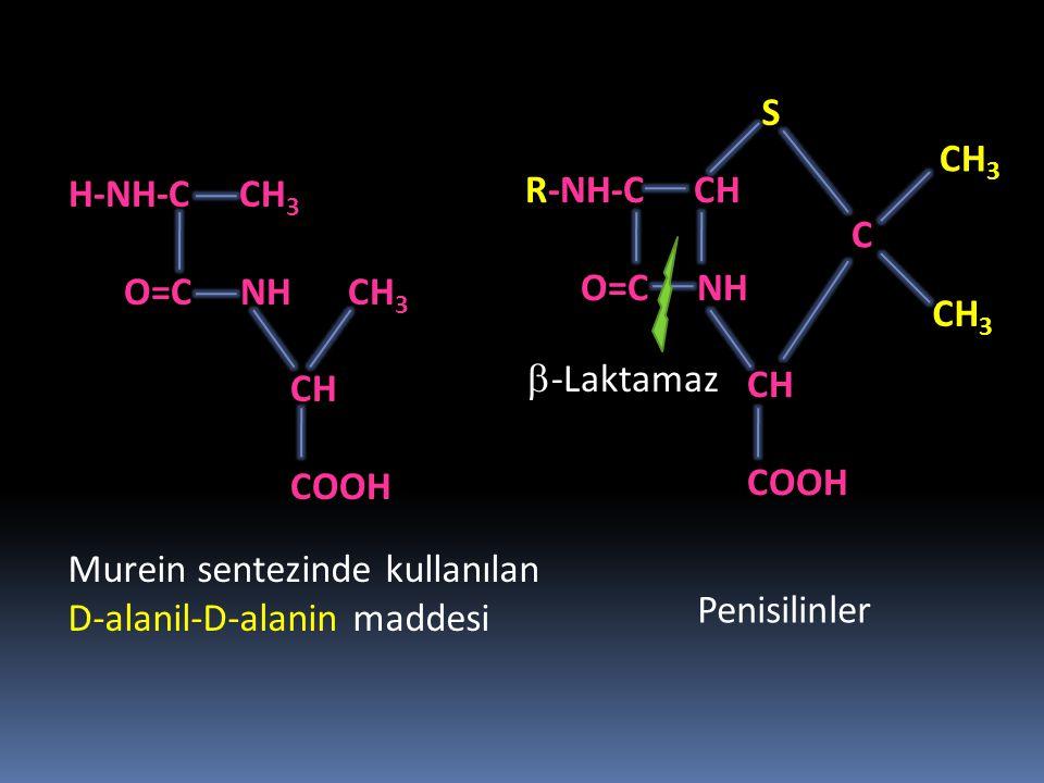 H-NH-C CH 3 O=C NH CH 3 CH COOH R-NH-C CH O=C NH CH COOH CH 3 C S Murein sentezinde kullanılan D-alanil-D-alanin maddesi Penisilinler  -Laktamaz