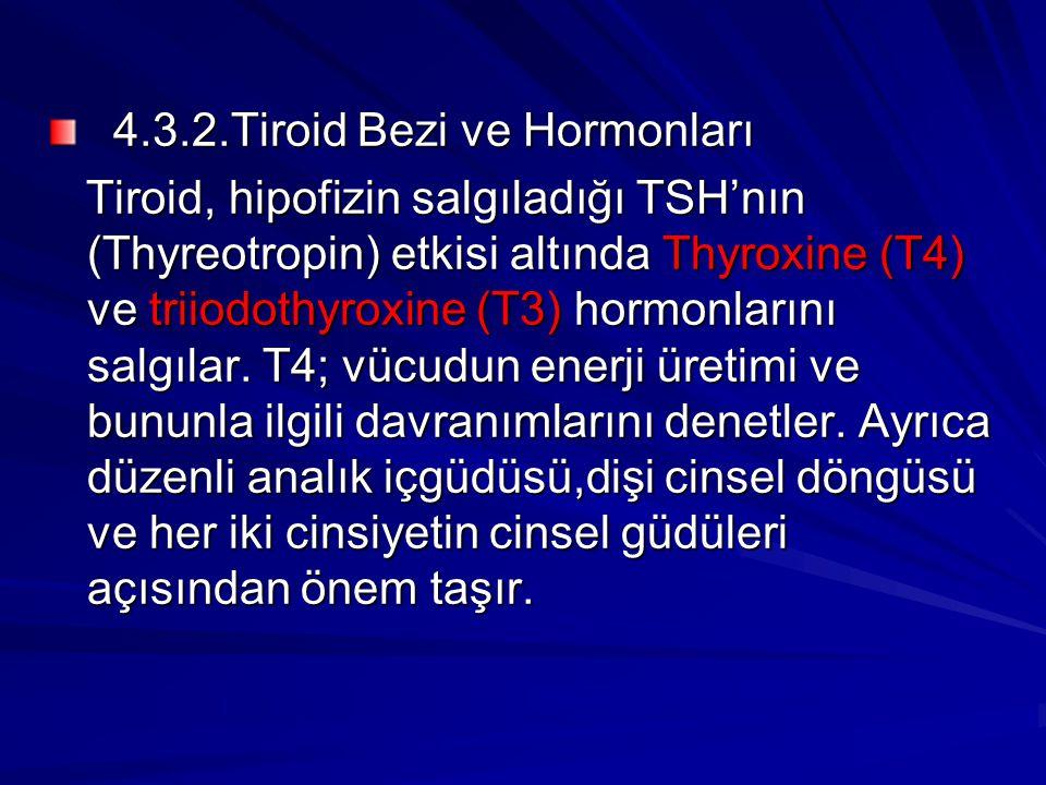 4.3.2.Tiroid Bezi ve Hormonları 4.3.2.Tiroid Bezi ve Hormonları Tiroid, hipofizin salgıladığı TSH'nın (Thyreotropin) etkisi altında Thyroxine (T4) ve