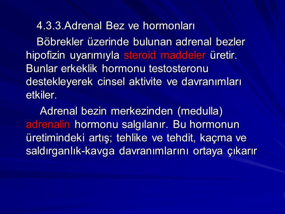4.3.3.Adrenal Bez ve hormonları 4.3.3.Adrenal Bez ve hormonları Böbrekler üzerinde bulunan adrenal bezler hipofizin uyarımıyla steroid maddeler üretir