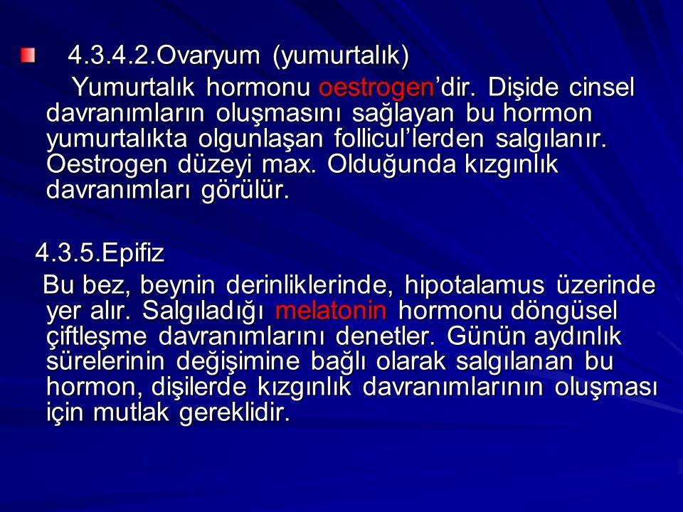 4.3.4.2.Ovaryum (yumurtalık) 4.3.4.2.Ovaryum (yumurtalık) Yumurtalık hormonu oestrogen'dir. Dişide cinsel davranımların oluşmasını sağlayan bu hormon