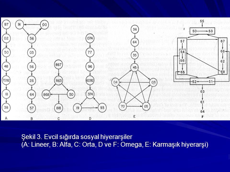 Şekil 3. Evcil sığırda sosyal hiyerarşiler (A: Lineer, B: Alfa, C: Orta, D ve F: Omega, E: Karmaşık hiyerarşi)