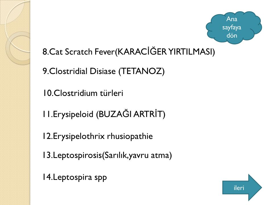8.Cat Scratch Fever(KARAC İĞ ER YIRTILMASI) 9.Clostridial Disiase (TETANOZ) 10.Clostridium türleri 11.Erysipeloid (BUZA Ğ I ARTR İ T) 12.Erysipelothrix rhusiopathie 13.Leptospirosis(Sarılık,yavru atma) 14.Leptospira spp