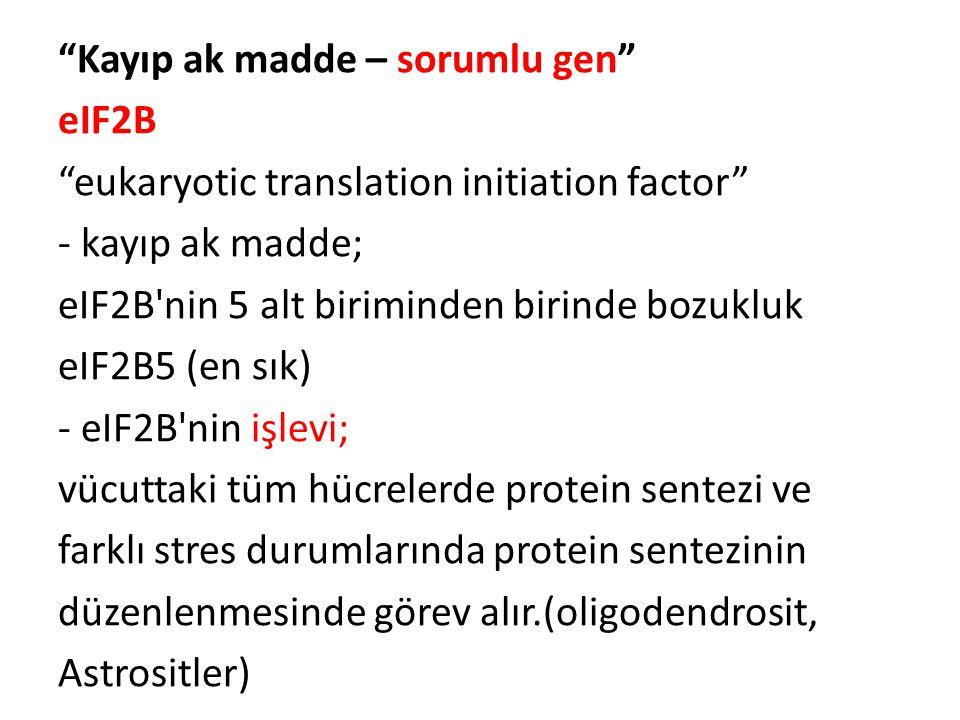 """""""Kayıp ak madde – sorumlu gen"""" eIF2B """"eukaryotic translation initiation factor"""" - kayıp ak madde; eIF2B'nin 5 alt biriminden birinde bozukluk eIF2B5 ("""