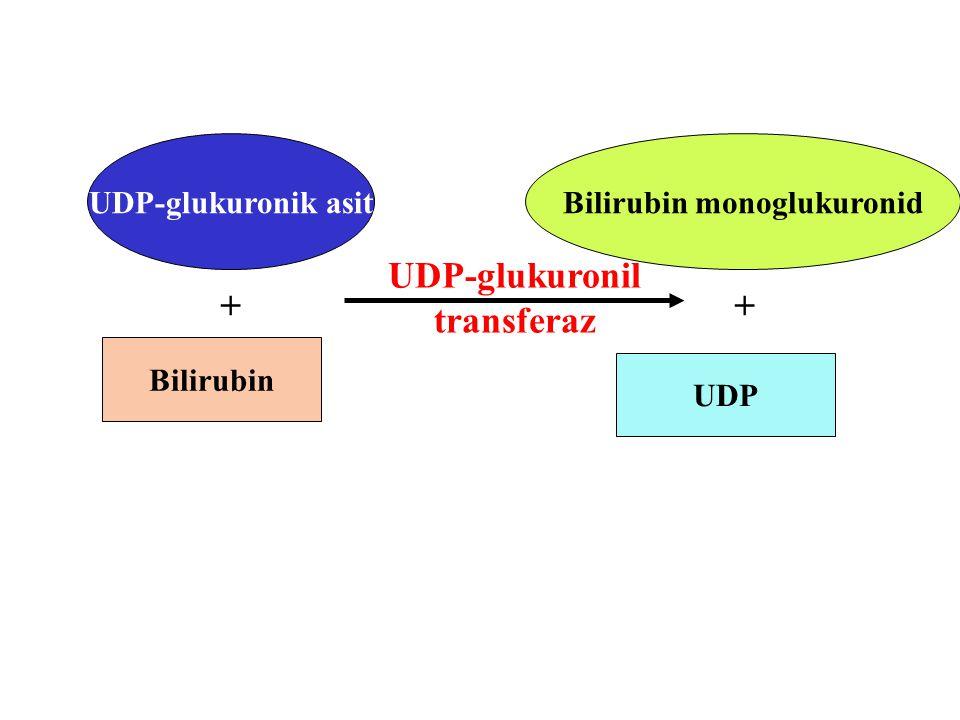 UDP-glukuronik asit Bilirubin + UDP-glukuronil transferaz Bilirubin monoglukuronid + UDP
