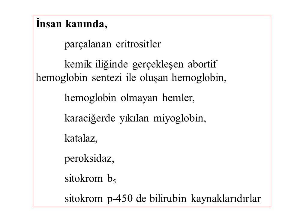 İnsan kanında, parçalanan eritrositler kemik iliğinde gerçekleşen abortif hemoglobin sentezi ile oluşan hemoglobin, hemoglobin olmayan hemler, karaciğ
