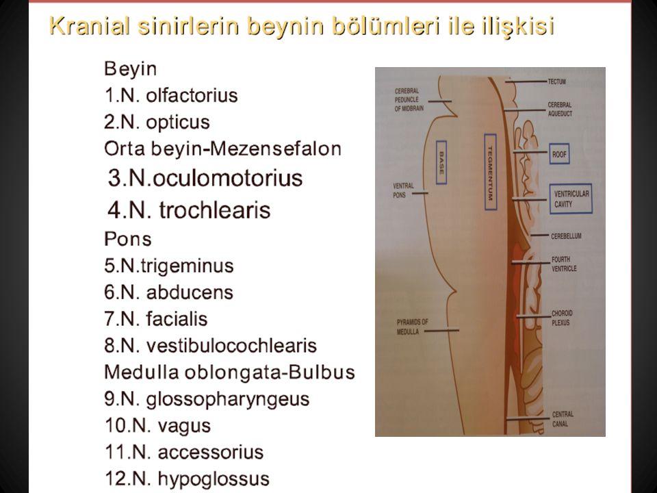 DuysalMotorOtonomRefleks I N.olfactorius  II N. opticus  III N.