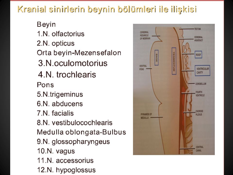 4. Troklear sinir