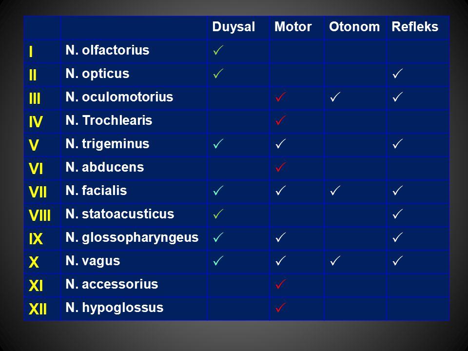 DuysalMotorOtonomRefleks I N. olfactorius  II N. opticus  III N. oculomotorius  IV N. Trochlearis  V N. trigeminus  VI N. abducens  VII N.